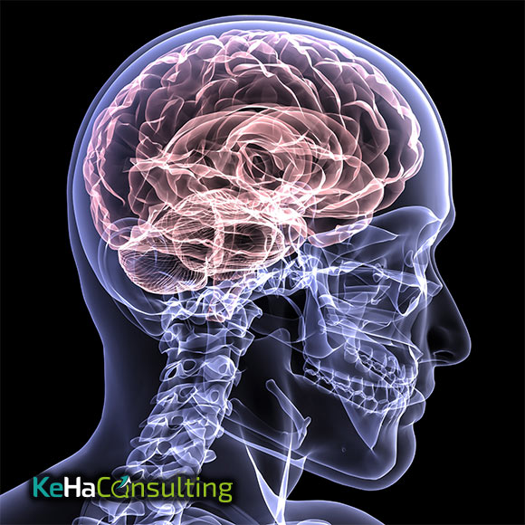 Neurobusiness Training Hannover KeHa Consulting
